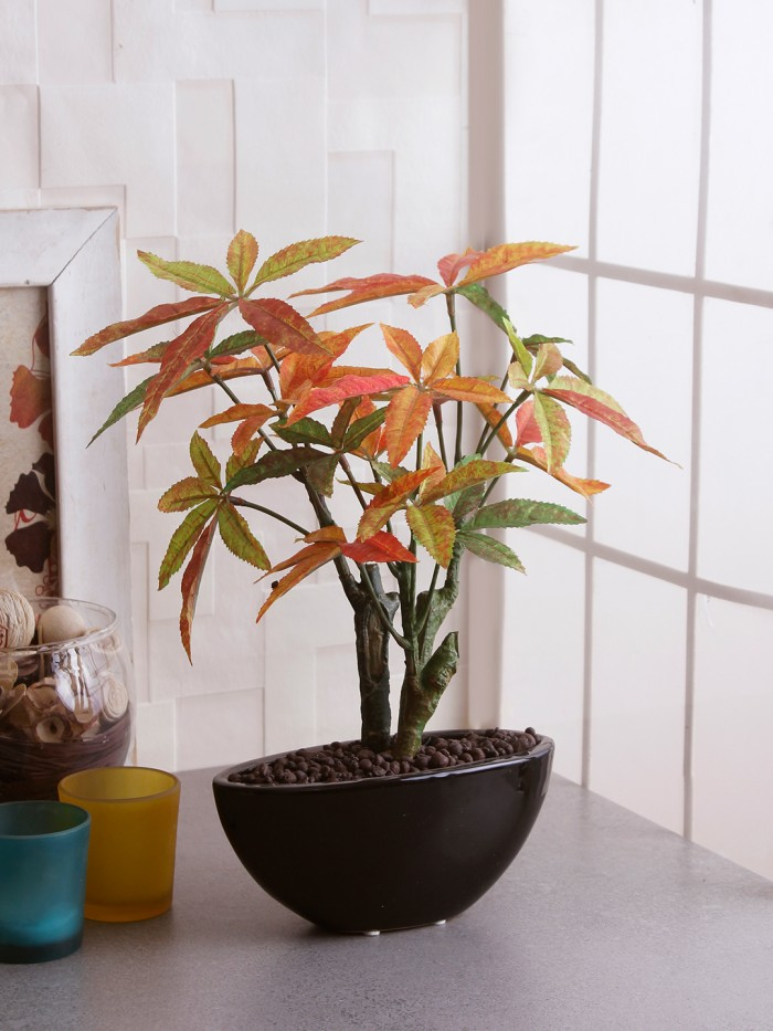 Buy Artificial Japanese Maple Bonsai Plant In A Ceramic Vase (29 Cm X 15 Cm X 32 Cm, Orange) Online