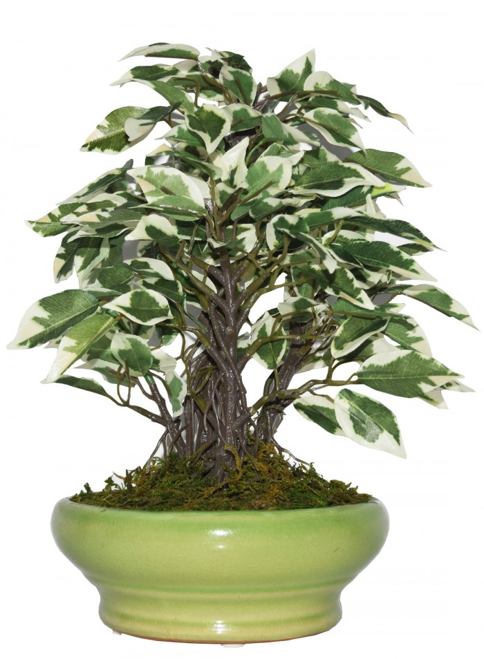Buy Artificial Ficus Bonsai Plant In A Ceramic Vase For Home And Office Decor (29 Cm Tall, White/Gre