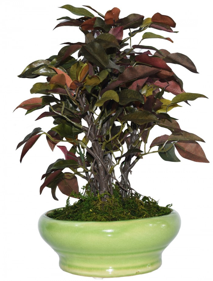 Buy Artificial Ficus Bonsai Plant In A Ceramic Vase For Home And Office Decor (29 Cm Tall, Green Red
