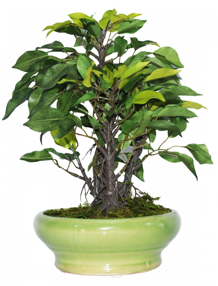 Buy Artificial Ficus Bonsai Plant In A Ceramic Vase For Home And Office Decor (29 Cm Tall, Dark Gree