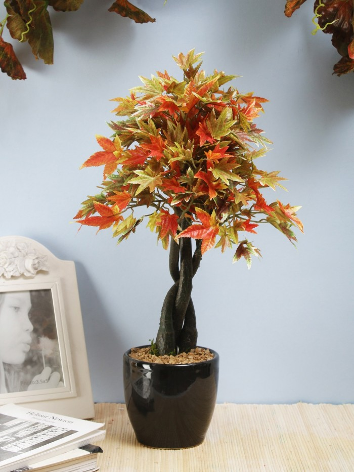 Buy Artificial Bonsai Japanese Maple Plant In A Glossy Ceramic Pot (233 Leafs, 39 Cm, Mixed Material