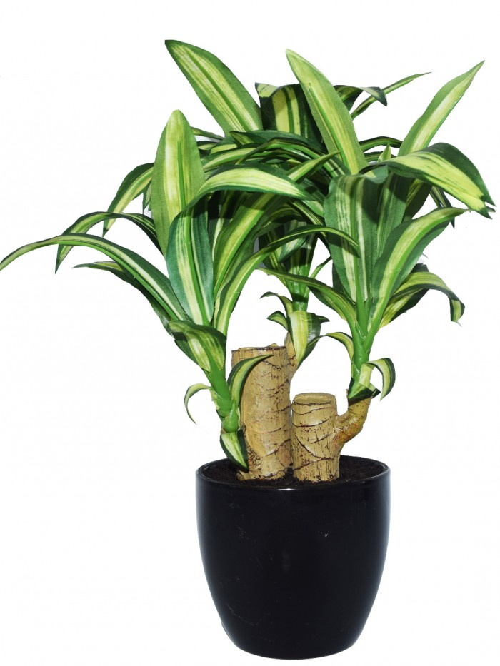 Buy Artificial Dracaena Bonsai Plant In A Ceramic Vase For Home D�cor (63 Leaves, 35 Cm, Green/Whi