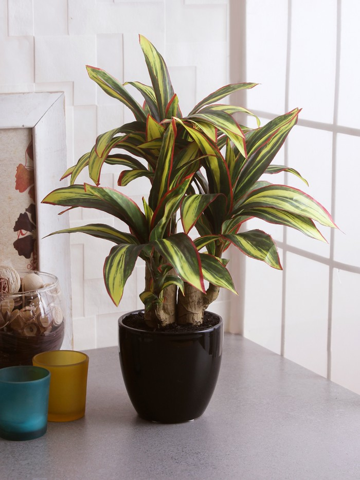 Buy Artificial Calathea Bonsai Plant In A Ceramic Vase For Home D�cor (63 Leaves, 35 Cm Tall, Mult