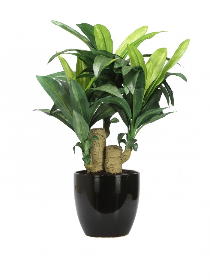 Buy Artificial Dracaena Bonsai Plant In A Ceramic Vase For Home D�cor (63 Leaves, 35 Cm Tall, Gree
