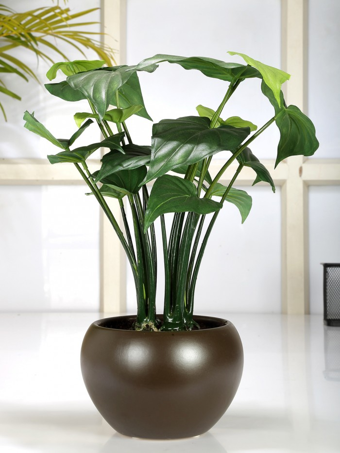 Buy Artificial Alocasia Bonsai Plant In A Ceramic Vase (Green, 17 Leaves; Glossy Vase, 37 Cm Tall) O