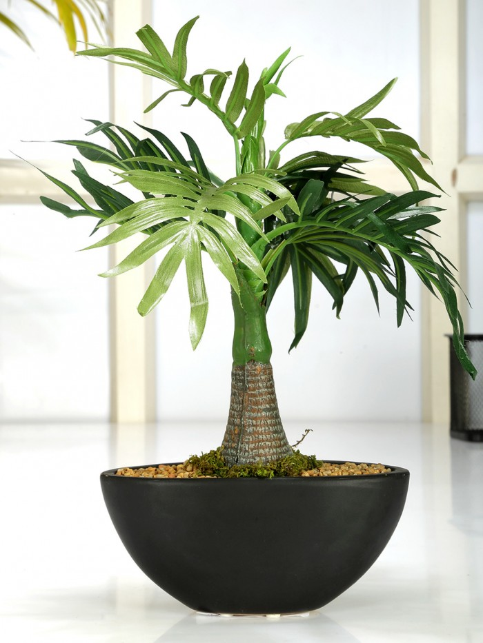 Buy Artificial Roystonea Bonsai Plant In A Ceramic Vase (32 Cm Tall, 11 Leaves, Green) Online