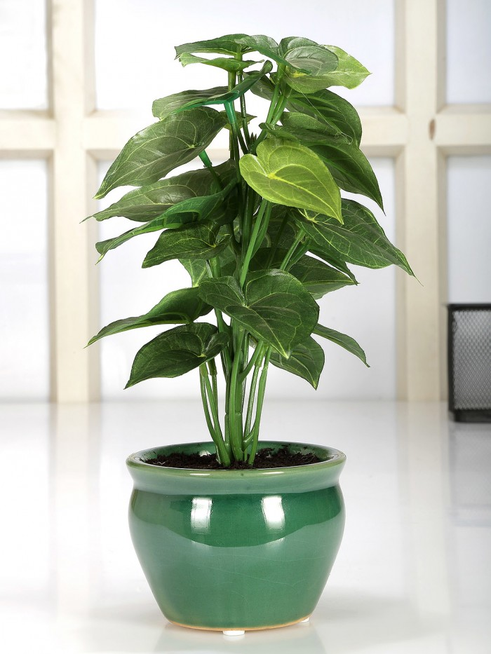 Buy Artificial Natural Looking Jatropha Bonsai Plant In A Ceramic Pot For Home Office Decor (28 Cm T