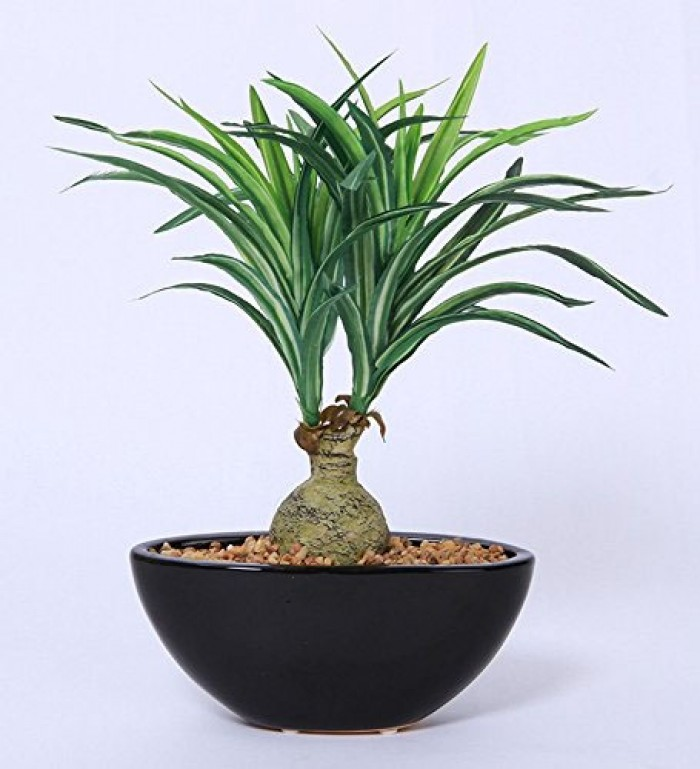 Buy Artificial Natural Looking Nolina Bonsai Plant In A Ceramic Pot For Home Office Decor (29 Cm Tal