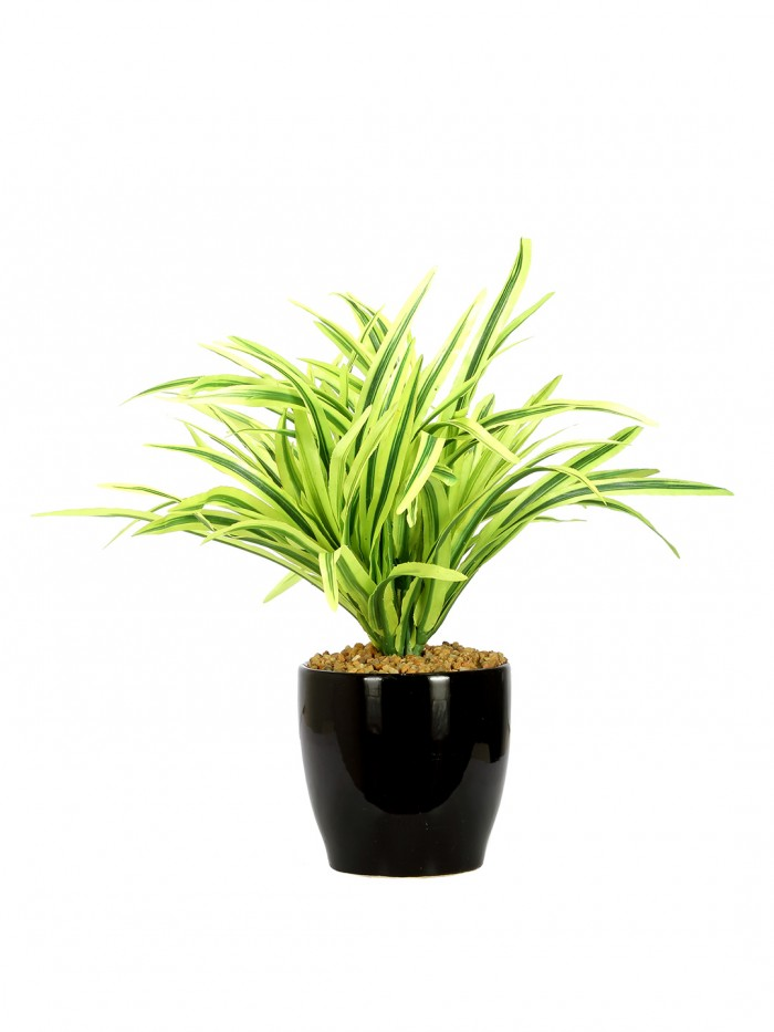 Buy Artificial Natural Looking Dracana Bonsai Plant In A Ceramic Pot For Home Office Decor (27 Cm Ta
