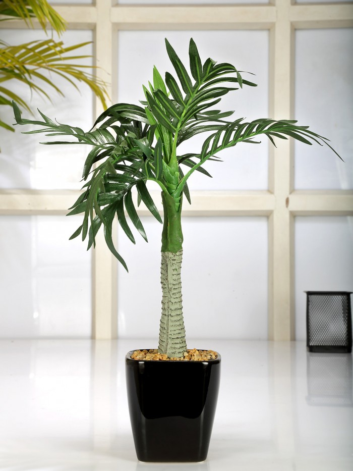 Buy Premium Range Artificial Roystonea Plant With Stylish Ceramic Vase (38 Cm Tall, Green) Online