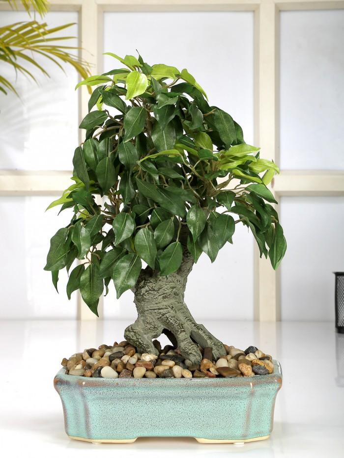 Buy Range Artificial Ficus Bonsai Plant In A Ceramic Vase (37 Cm Tall, 247 Leaves) Online