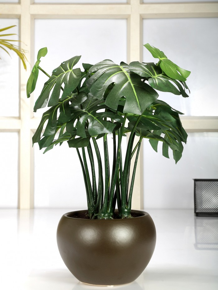 Buy Artificial Philodendron Bonsai Plant In A Ceramic Vase (Green, 17 Leaves; Glossy Vase, 37 Cm Tal