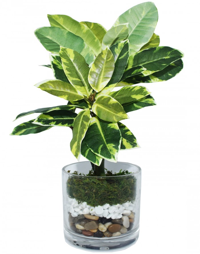 Buy Artificial Quercus Plant In A Glass Vase For Home D�cor (30 Cm, Green) Online