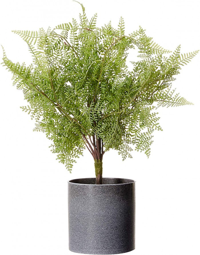 Buy 53 Cm Tall Decorative Artificial Roystonea Plant In A Chic Ceramic Pot Online