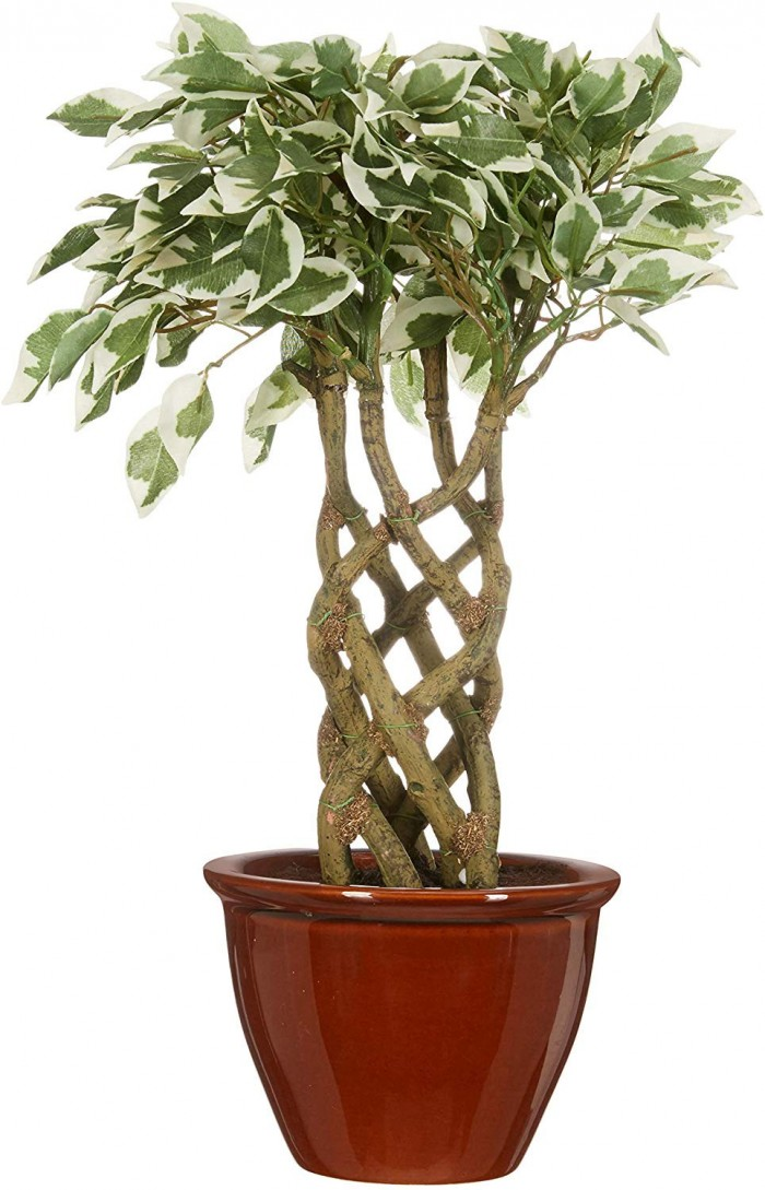 Buy Artificial Ficus Bonsai Plant In A Ceramic Vase For Home And Office Decor (6 Stems, 252 Leafs, 4