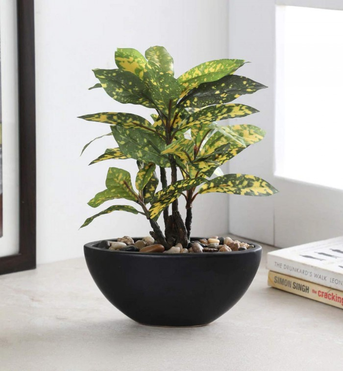 Buy Artificial Natural Looking Croton Bonsai Plant In A Ceramic Pot For Home Office Decor (29 Cm Tal