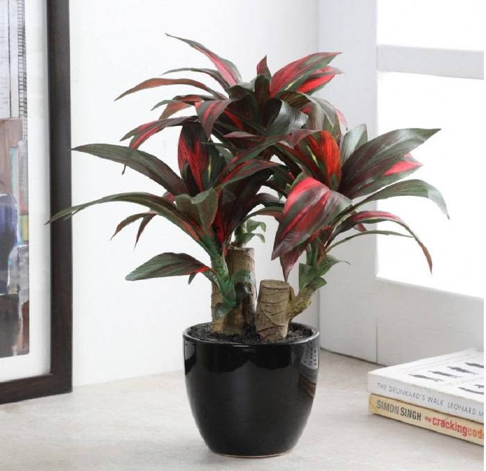 Buy Artificial Dracaena Bonsai Plant In A Ceramic Vase For Home D�cor (63 Leaves, 35 Cm, Green/Red
