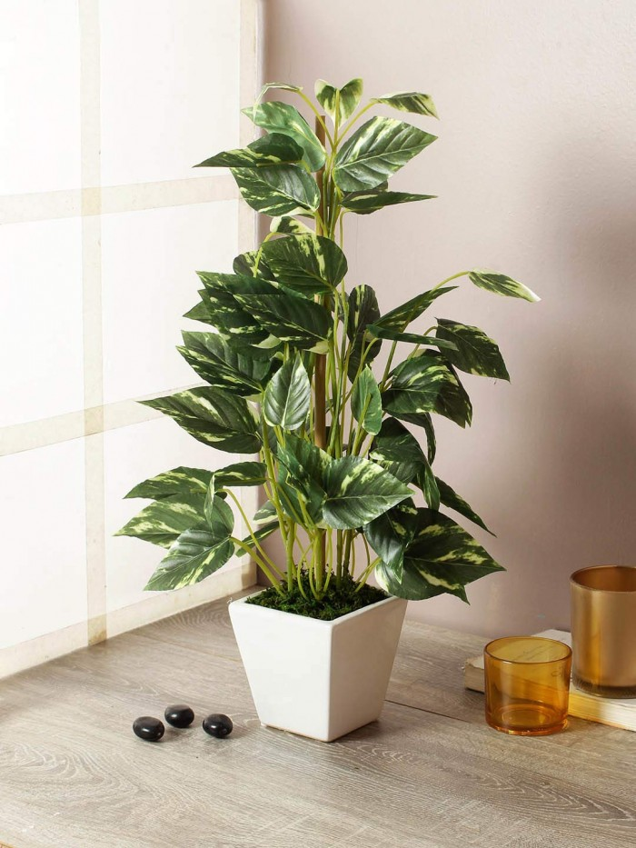 Buy Artificial Money Plant with Pot : 50 cm/20\