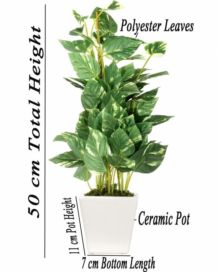 Buy Artificial Money Plant with Pot : 50 cm/20