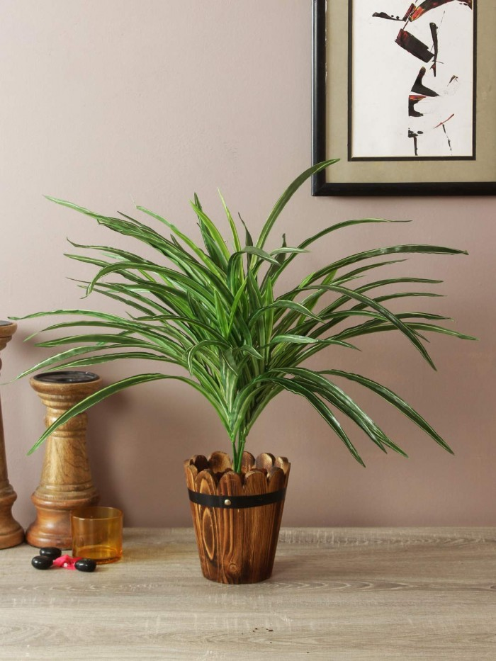Buy Artificial Dracaena Bush Plant (60 cm, Green) Online