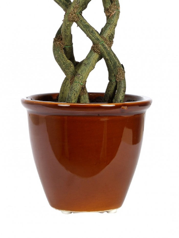 Buy Artificial Ficus Bonsai Plant in a Ceramic Vase for Home and Office Decor (16Artificial Ficus Bo