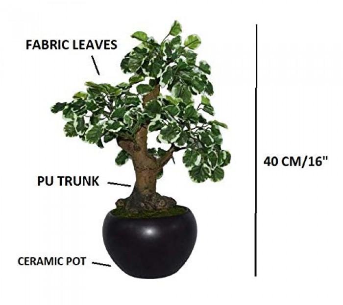 Buy Artificial Polyscia Bonsai Plant in a Ceramic Pot - 16