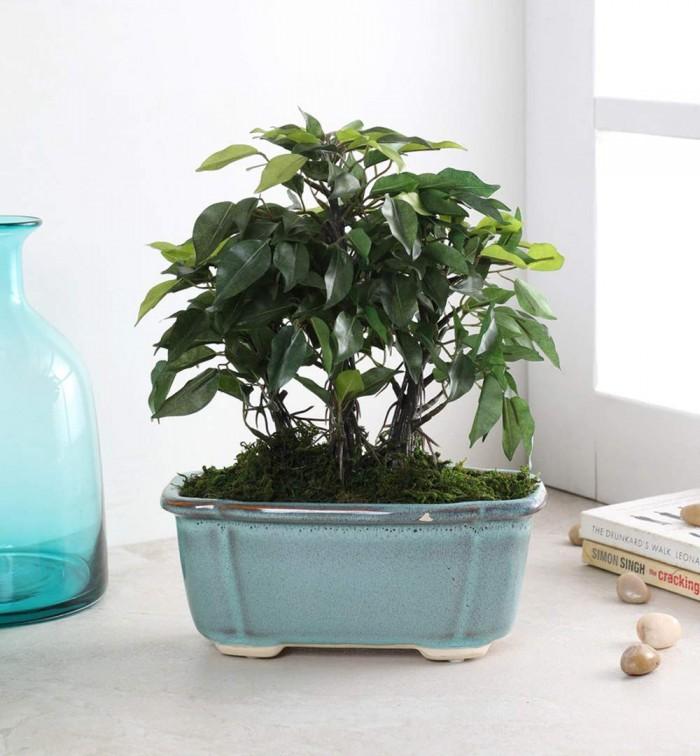 Buy Artificial Ficus Bonsai Plant in a Ceramic Vase  : 14\